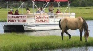 Have A One-Of-A-Kind Experience With The Chincoteague Island Ponies On Captain Dan's Boat Tour In Virginia