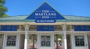 You Can Enjoy Breakfast With Elephants, Chimps, Penguins, And More At The Maryland Zoo