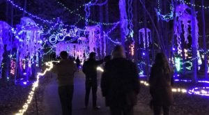 Maryland's Annmarie Garden In Lights Is A Magical Wintertime Fairyland Experience