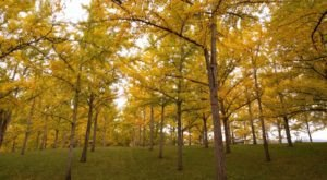 The State Arboretum Of Virginia Is A Nature Lover's Paradise Any Time Of Year