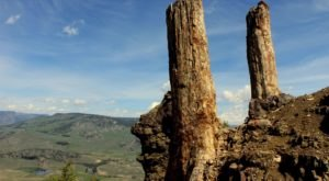 At Over 55 Million Years Old, Some Of The Oldest Trees In The World Are Found In Wyoming