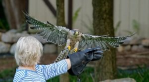 Interact With Owls And Other Birds At The Raptor Hill Falconry, A Unique Wildlife Preserve In Virginia