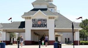 Walk Through An Underwater Shark-Infested Tunnel At The Oklahoma Aquarium In Oklahoma