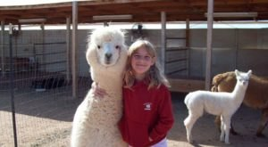 Desert Mirage Alpaca Ranch In Arizona Makes For A Fun Family Day Trip