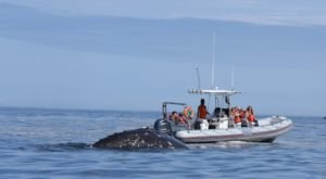 Get An Up-Close Look At Oregon's Gentle Giants When You Take This Trip With Whale Research Eco-Excursions
