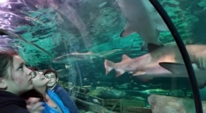 Walk Through An Underwater Shark-Infested Tunnel At Ripley's Aquarium Of Myrtle Beach In South Carolina