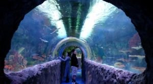 Walk Through An Aquatic Tunnel And Hand-Feed Stingrays At Via Aquarium In New York