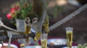 You Can Enjoy Breakfast With Monkeys At This Arizona Zoo