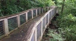 Explore Over 100 Acres Of Louisiana's Wetlands At The Bluebonnet Swamp Nature Center
