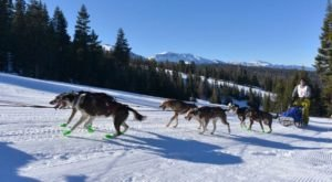 Watch Beautiful, Athletic Dogs Race Through The Snow In Oregon's Mountains During This Extreme Sled Dog Race