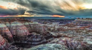 At Over 200 Million Years Old, Some Of The Oldest Trees In The World Are Found In Arizona