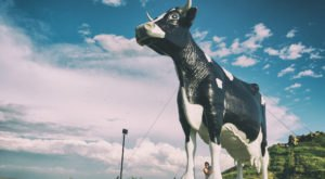 The Salem Sue Roadside Attraction In North Dakota Is The Most Unique Thing You've Ever Seen
