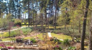 Explore More Than 40 Acres Of Beautiful Botanical Gardens at The R.W. Norton Art Gallery In Louisiana