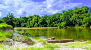 Bogue Chitto State Park Near New Orleans Is A Natural Oasis Waiting For You To Explore