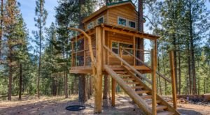 Sleep Among Ponderosa Pines At The Cozy Backcountry Treehouse In Montana