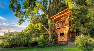 The Dreamy Treehouse Tucked Away Above The Hawaiian Coast Is A Perfect Getaway