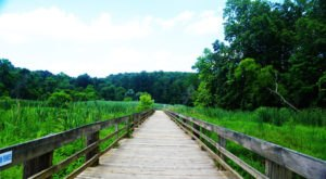 Explore Boardwalks, Bridges, And Water Views At Harford Glen Trail In Maryland
