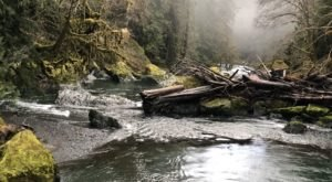 If You Only Have Time For One Hike In Washington This Year, Make It Staircase Rapids