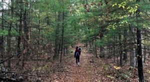 The 4-Mile Twin Oaks Trail In Maryland Takes You Through The Enchanting Green Ridge State Forest