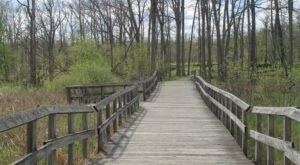 9 Magnificent Trails You Have To Hike In Metro Detroit Before You Die