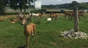Wildlife Enthusiasts Will Have A Blast At The Michigan Whitetail Hall Of Fame Museum