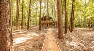 Sleep Among Towering Oaks And Pines At The Tree House In Tyler, Texas