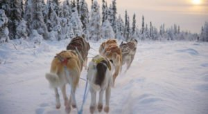 Experience Alaska Backcountry Like An Iditarod Racer At Paws For Adventure In Fairbanks