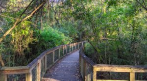 You Can Stroll Through The Swamps At The Bluebonnet Swamp Nature Center In Louisiana