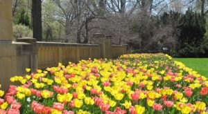 The Wisconsin Festival Of Spring Will Have Over 15,000 Flowers In Bloom This Spring