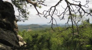 At Over 750 Years Old, Some Of The Oldest Trees In The Country Are Found In South Dakota