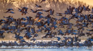 600,000 Sandhill Cranes Invade Central Nebraska Every Spring And It's A Sight To Be Seen