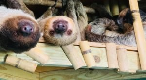You Can Play With Sloths At Barn Hill Preserve In Louisiana