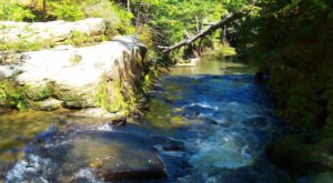 The 7 Best Trails To Hike In The Sipsey Wilderness, One Of Alabama's Top Hiking Destinations