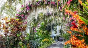 Walk Through A Sea Of Orchids At The New York Botanical Garden's Orchid Show