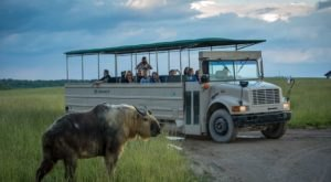 Adventure Awaits At A Drive-Thru Safari Park, The Wilds Near Cincinnati
