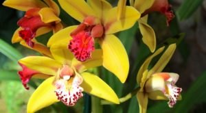Walk Through A Sea Of Orchids At The Missouri Botanical Garden's Orchid Show