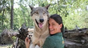 Spend The Day With Wolves At The Seacrest Wolf Preserve In Chipley, Florida