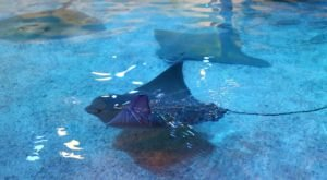 You Can Swim With Stingrays At Adventure Aquarium In New Jersey