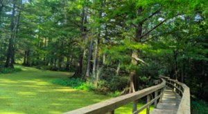 Escape The Ordinary With A Stroll Through The Northlake Nature Center Near New Orleans