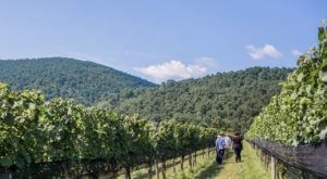 The Piedmont Region Of Virginia Was Recently Named Among The Best Wine Destinations In The World