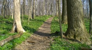 Explore The Oldest Trees In The Hoosier State At These 7 Old-Growth Forests In Indiana