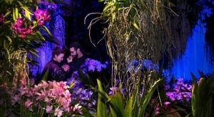 Walk Through A Sea Of Orchids At The Illinois Chicago Botanical Garden's Orchid Show
