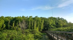 John James Audubon State Park Has A Boardwalk Hike In Kentucky That Leads To Secret Wetlands