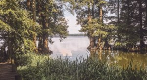 The Reelfoot Lake Boardwalk Hike In Tennessee That Leads To Incredibly Scenic Views