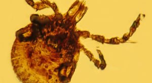 This Year, New Jersey Is Experiencing A Major Surge In Tick Populations