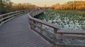 Anhinga Boardwalk Trail In Florida Leads To Incredibly Scenic Views