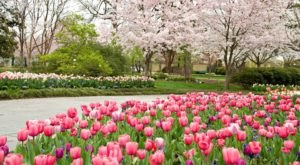 Over 500,000 Flowers Will Be In Bloom This Spring At The Dallas Arboretum In Texas