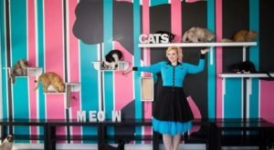 La Gatarra Cat Lounge & Boutique Is A Completely Cat-Themed Catopia Of A Cafe In Arizona