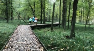 The Maumee Bay Trail Is A Boardwalk Hike In Ohio That Leads To Gorgeous Wetlands