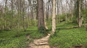 Hike Through Over 3 Miles Of Old Growth Forest In The Heart Of Cincinnati At Caldwell Nature Preserve
